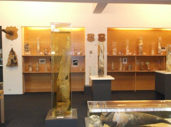 Elf Penis Picture Of Icelandic Phallological Museum