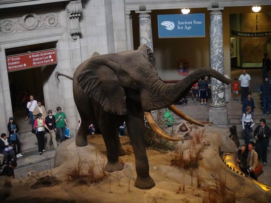 National Museum of Natural History : Museo Nacional de Historia Natural