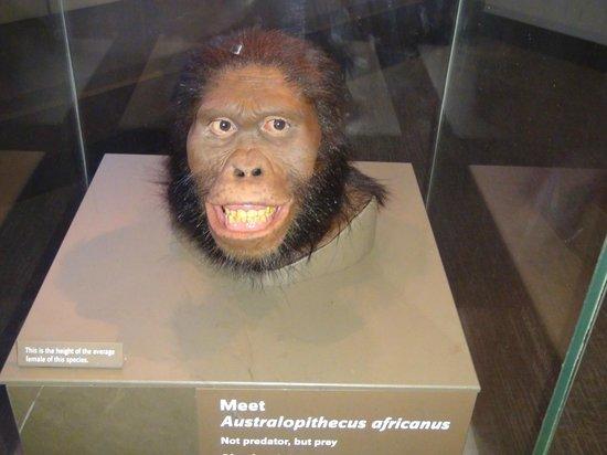 Museo Nacional Smithsonian de Historia Natural: Museo Nacional de Historia Natural