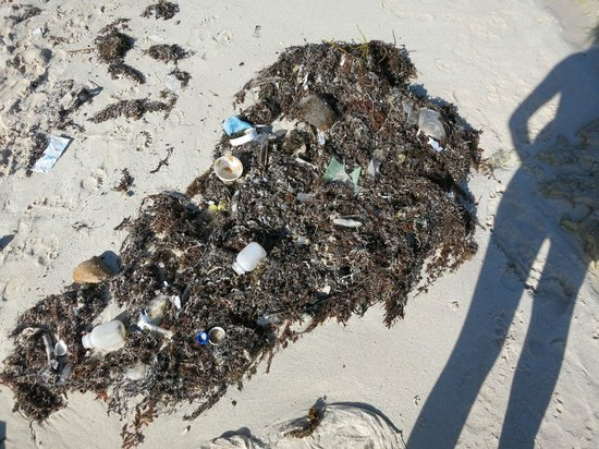 El Dorado Royale, a Spa Resort by Karisma : Trash on the beach and in the water.