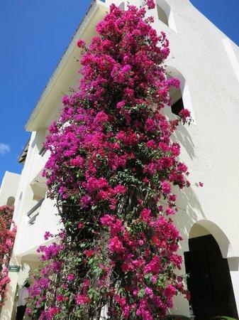 El Dorado Royale, by Karisma: Beautiful flowers