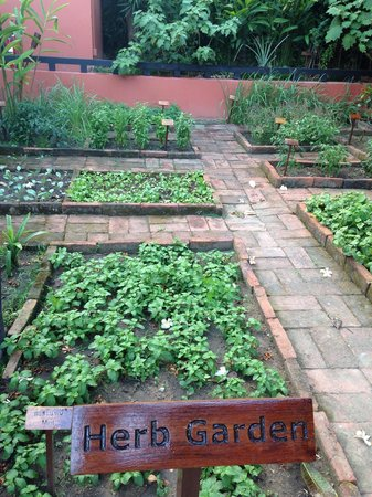 Renaissance Koh Samui Resort & Spa: Herb garden