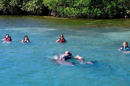 Anthony's Key Resort : I'm ridin' on dolphins...