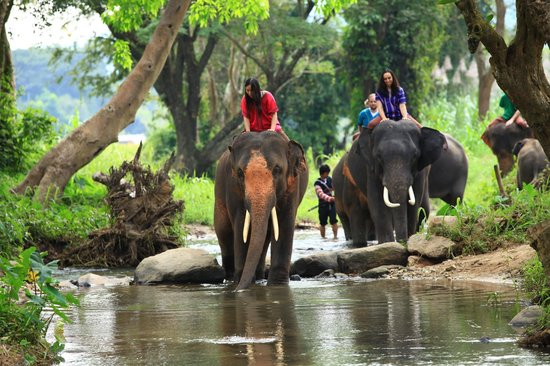 Patara Elephant Farm - Private Tours : Trekking to the waterfall