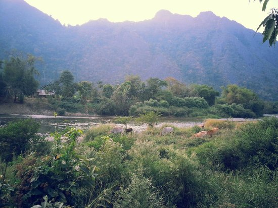 Vang Vieng Organic Farm: View from the restaurant
