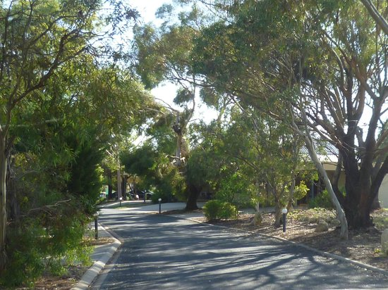 Barmera Country Club: Entrance drive