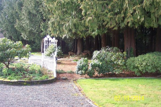 Sea Cliff Gardens Bed & Breakfast : Safe haven for a deer family