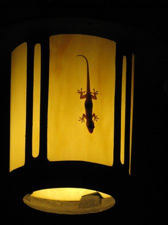 Casa Xanadu: One of the many resident geckos