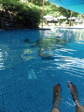 First Landing Beach Resort & Villas: The pool.
