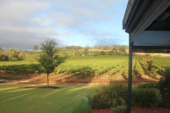 Seppeltsfield Vineyard Cottage: The View