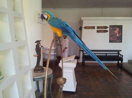 Anantara Hua Hin Resort: The resident macaw at Anantara Hua Hin