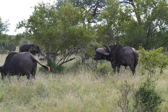 Sausage Tree Safari Camp : Au plus prêt des animaux