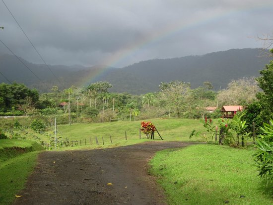 La Anita Rainforest Ranch: The farm as seen from the lodge with cabins on the right