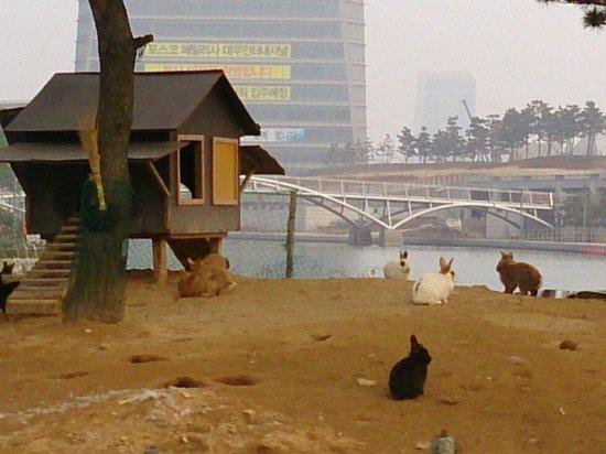 Incheon, South Korea: 松島セントラルパークのうさぎ島