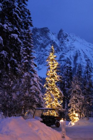 Emerald Lake Lodge : Вечерний пейзаж