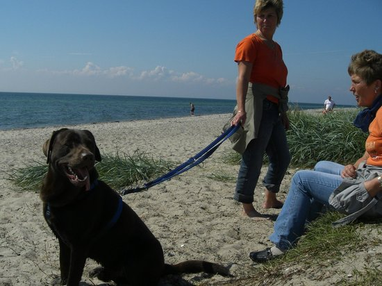 Burg auf Fehmarn, Jerman: Hundestrand Fehmarn