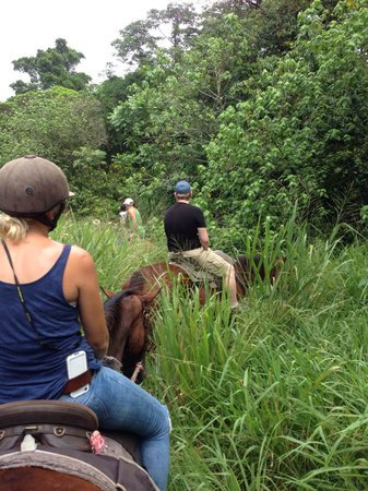 Cow Bay Horse Rides : Riding through the rainforest and the wetland around
