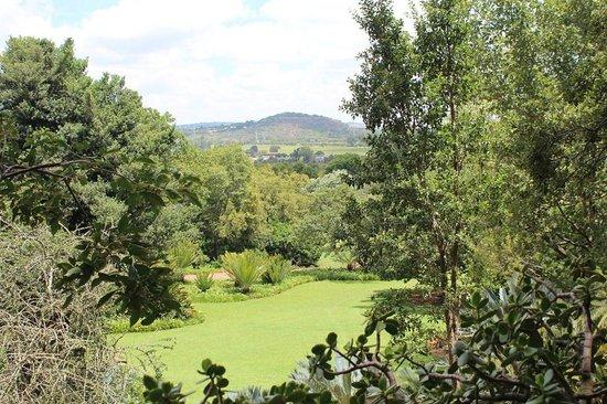 Pretoria, South Africa: Very greenish, many birds