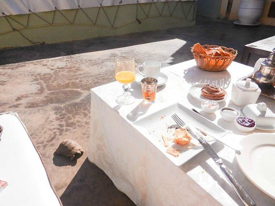 Riad des Arts : petit déjeuner sur le toit du riad en bonne compagnie