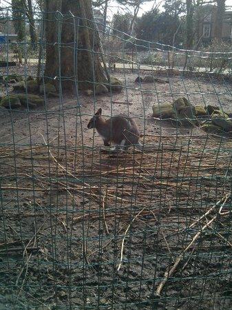 ARTIS Amsterdam Royal Zoo: un des animaux