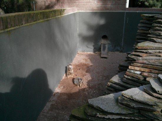 Artis Zoo: lemuriens