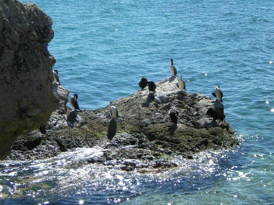 Golfo di Trieste: Abitanti del golfo!
