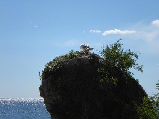 Golfo di Trieste: Animali in vista