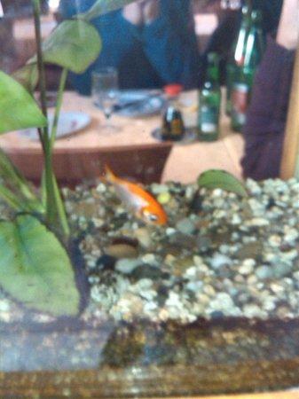 Bin Hai Ristorante Cinese: Pesce italo