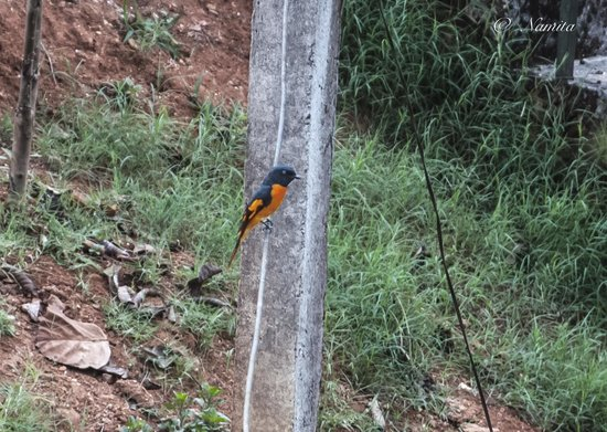 Glenora Homestay: birds at homestay