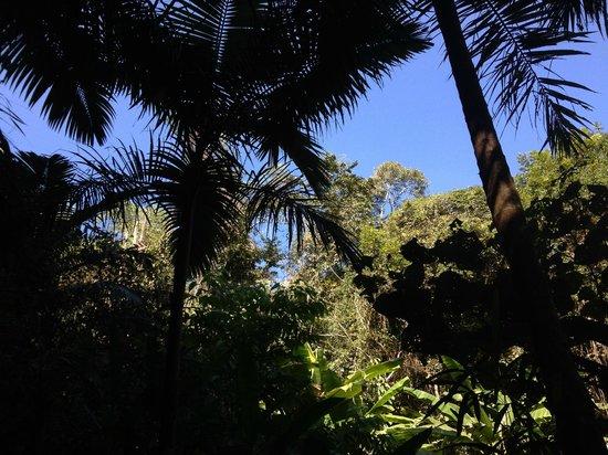 Xishuangbanna Rainforest