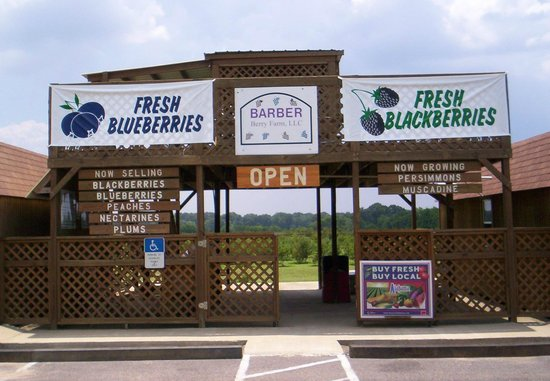 Millbrook, AL: We're usually open for picking blueberries and blackberries starting around the end of May.