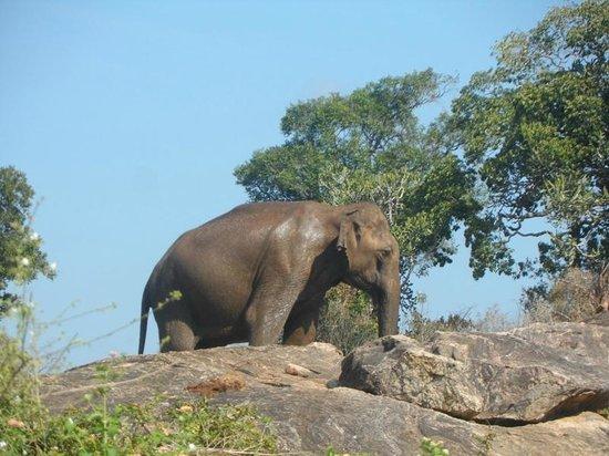 Hotel Whiteroyal (Embilipitiya, Sri Lanka) - Hotel - anmeldelser - sammenligning af priser ...