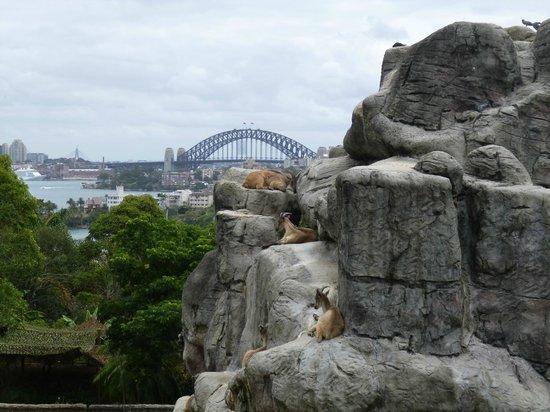 Taronga Zoo: Goats!