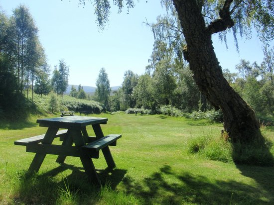 Faichemard Farm Campsite: One of our secluded pitches