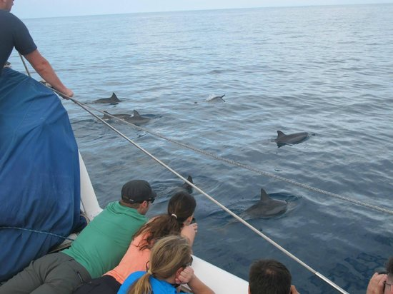 Holo Holo Charters: Spinner Dolphins at boatside