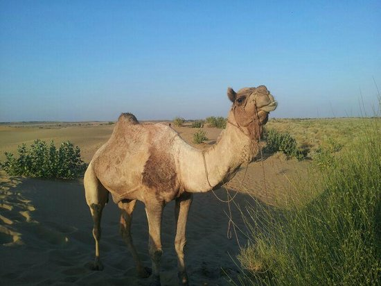 Pleasant Haveli Camel Safari