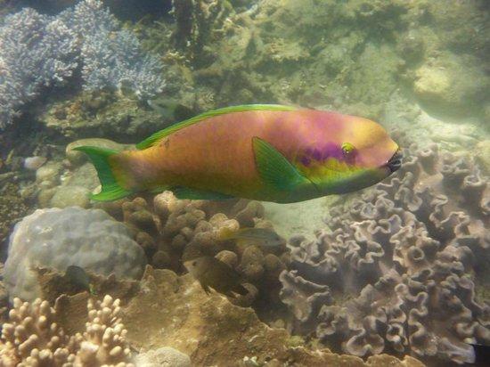 Mantaray Charters: Marine Fish