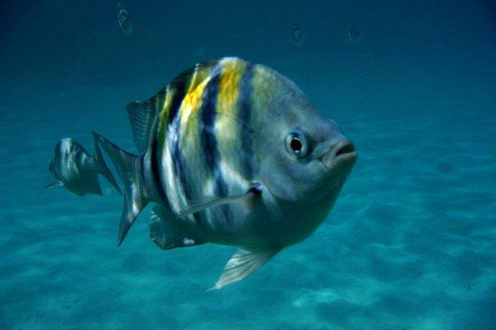 Infinity Bay Spa and Beach Resort : Snorkeling