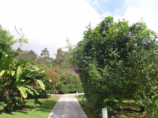 Hotel Mountain Paradise: arbres