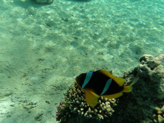 Colona Divers : Vi hittade Nemo