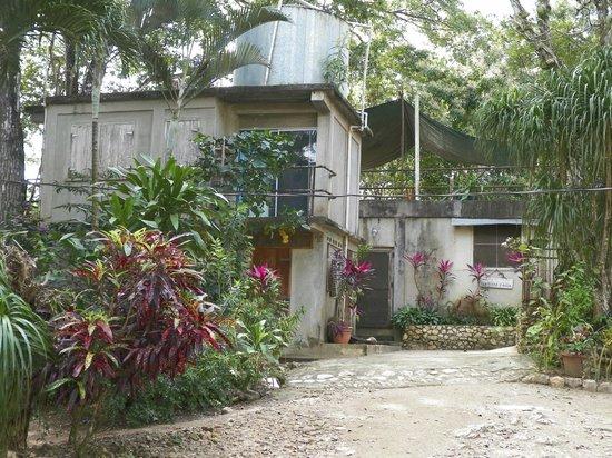 Clarissa Falls Resort : Plants abound