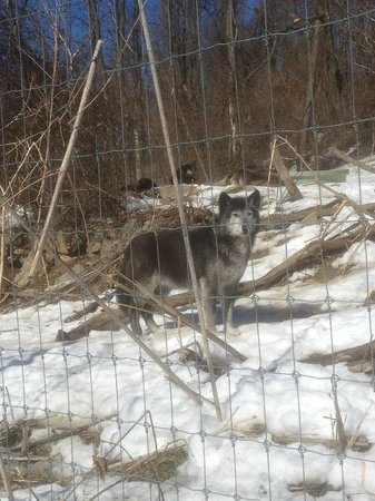 Wolf Sanctuary of PA: Posing for one last photo as we were leaving.