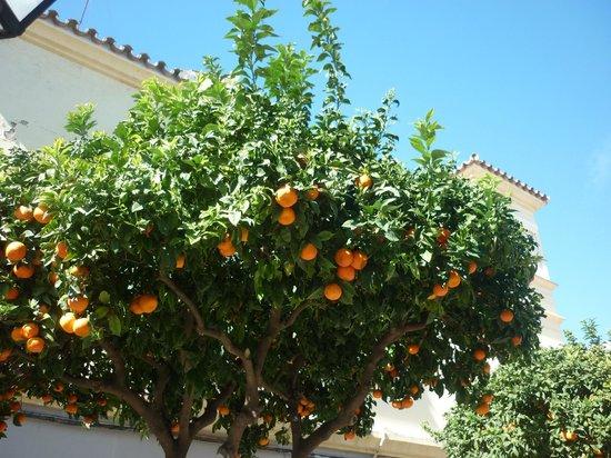 Estepona Marina: tree