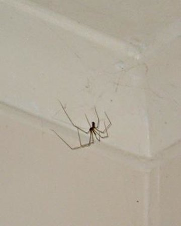 The Lightkeepers Inn: Dead spider in room
