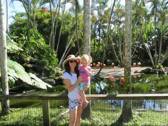 Flamingo Gardens: The Flamingo Exhibit