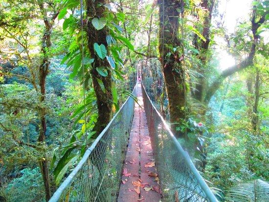 Heliconias Lodge: puente colgante
