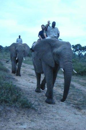 Ecolux Boutique Hotel: Elephant Safari