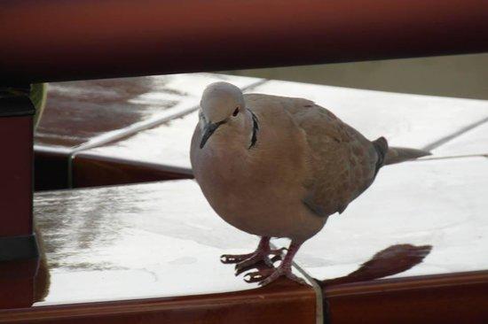 Barcelo Corralejo Bay: Fågel