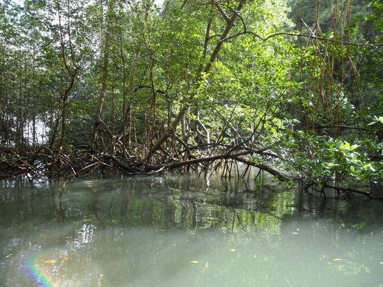 Parque Nacional Los Haitises: la foce