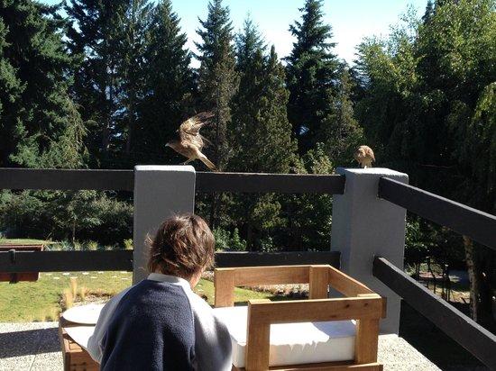 Aldea Andina: Mi hijo jugando en el balcón con las mascotas locales